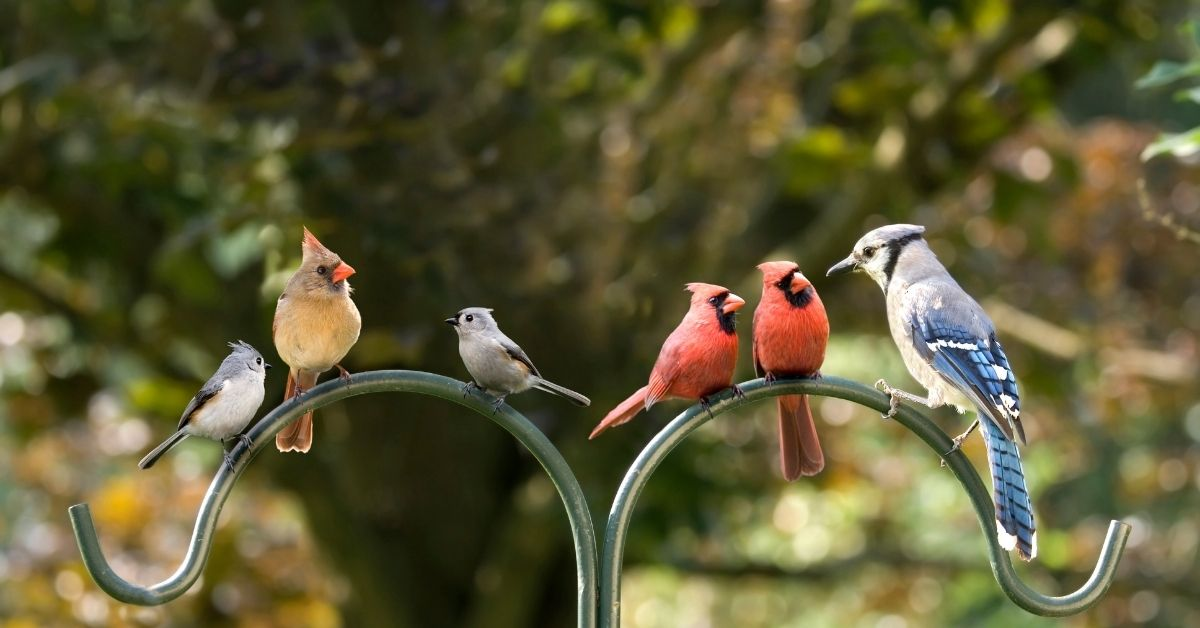 Variety of birds having a meeting